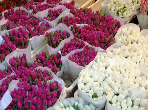 Оптом цветы коломна